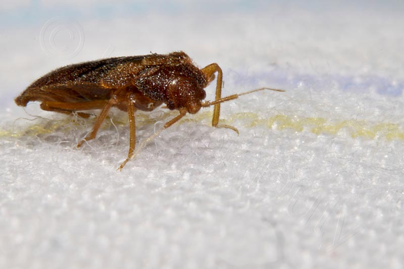 Insekten Im Bett Die Neueste Innovation Der
